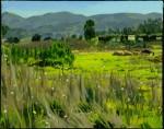 Marin Field